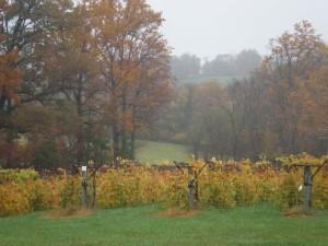 Chrysilis Winery Vines -Med Resol